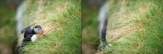 Sklizeň trávy je někdy nebezpečná záležitost:)