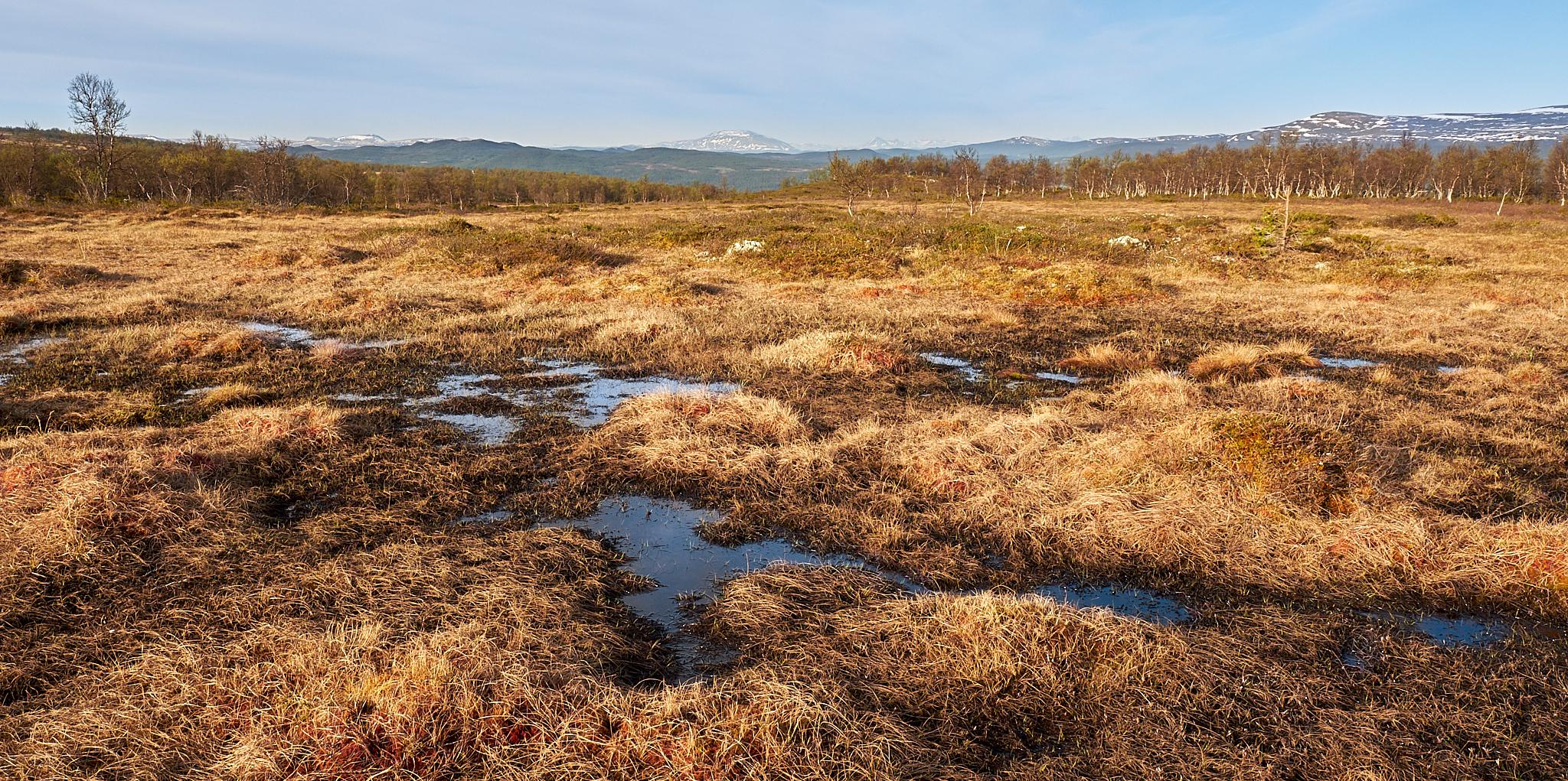 Louky v kopcích – voda zde občas tvoří potůčky a tůňky, ale většina je jí schovaná pod trávou.
